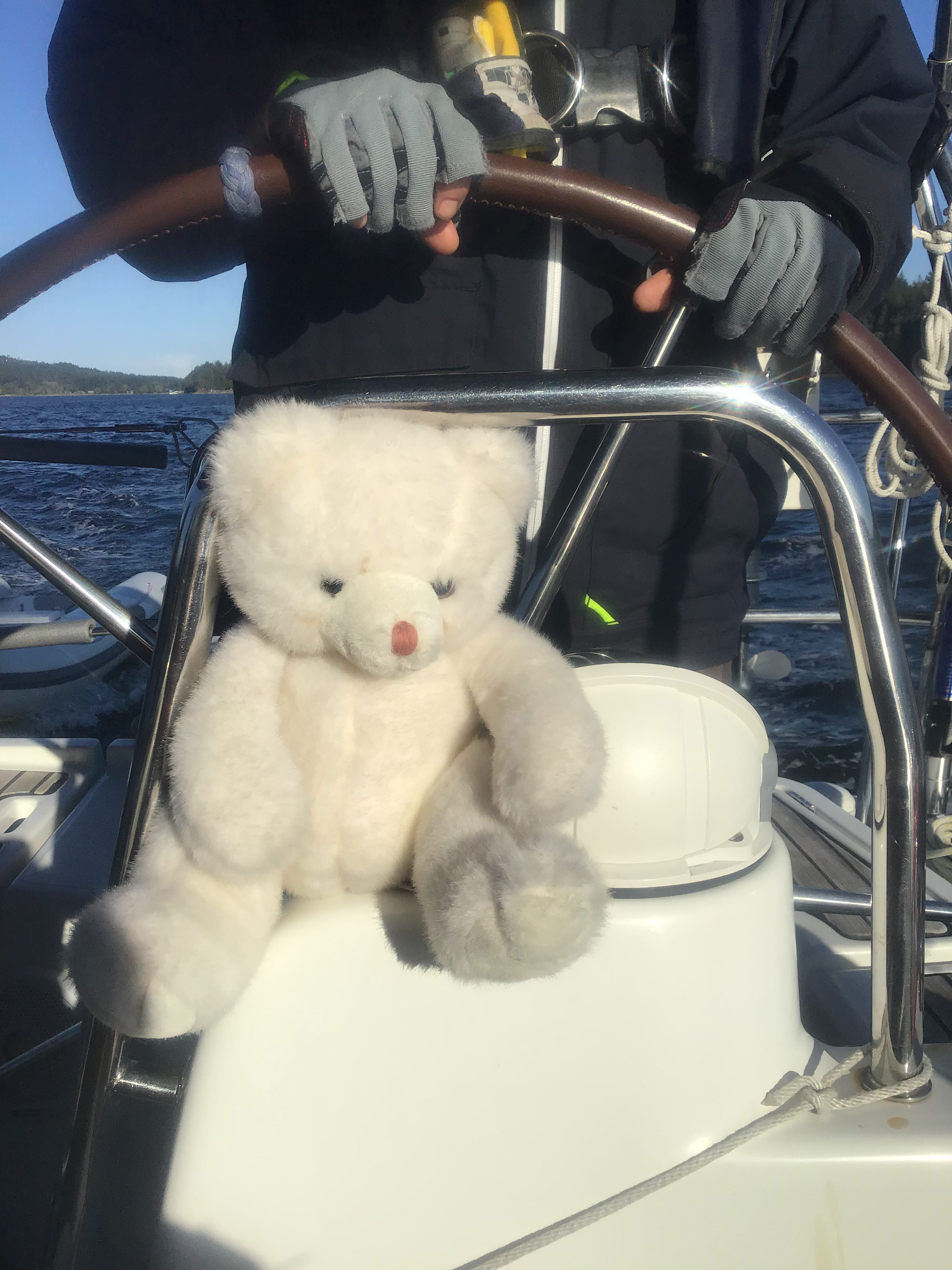 Teddy Bear thinking he's the skipper